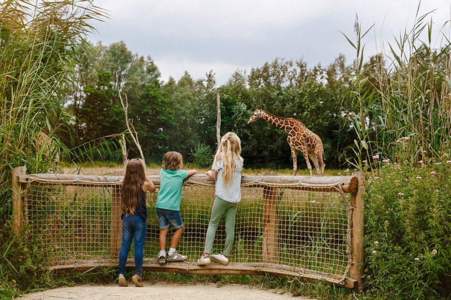 Bezoek ZooParc Overloon